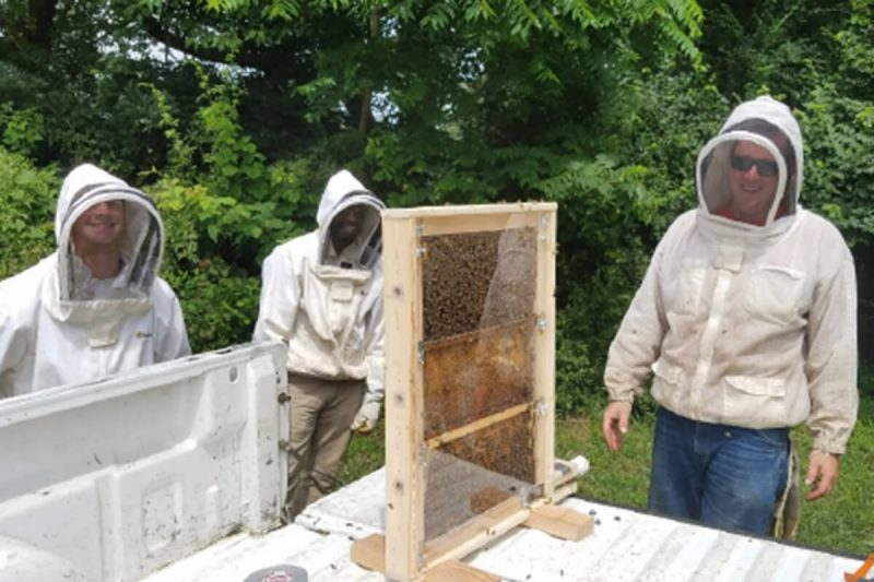 Evaluating the feasibility of using sound to track honey bee recruitment dances